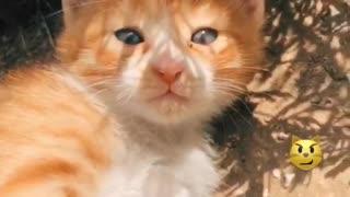 Kitten sweet cat