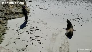 funny animal and people relation