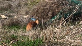 Wild cat eating garbage in street