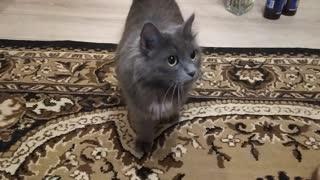 My cat is crazy