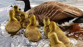 Sunshine Little Ducks 🦆