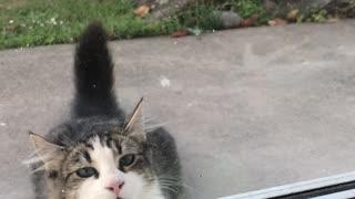 Parrot Plays Peek-A-Boo With Neighbors Cat