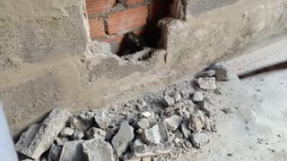 Cat Caught in Brick Wall Saved