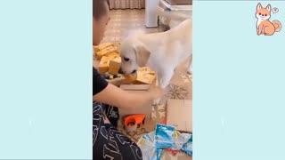Perritos Lindos 😍 Perros Lindos, Divertidos e Inteligentes
