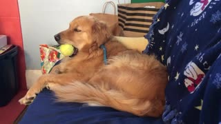 Dog Struggles To Keep Eyes Open But Still Holds On To Favorite Ball