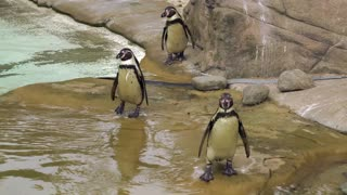 Penguins so cute
