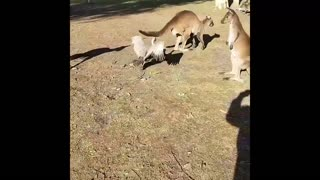 Funniest Animals😸 Attacking People Reaction😁