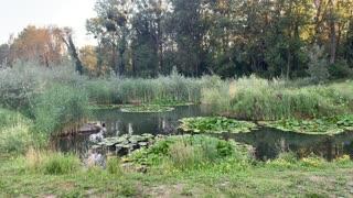 Parc des Grangettes 4