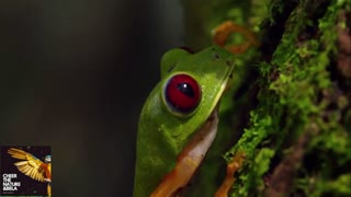 Amazon Rainforest Dangerous Animals