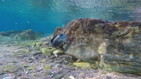 Fish swim in the Red Sea, colorful fish, Eilat Israel 3