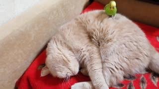 Кот и птица, милые животные #37