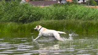 A dog runs into the water in slow motion❤️