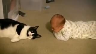 Cat owners meeting their pests for the 1st time ( emotional)