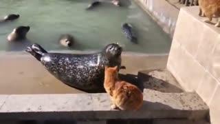 Cat slaps a seal l