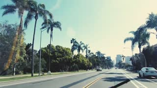 Palm Trees Seen From a Moving Vehicle
