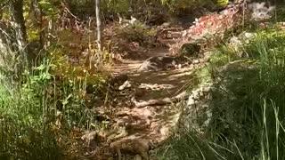 Gorgeous Arizona Trail