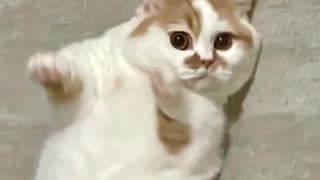 Big cat cat cat cat cat cat