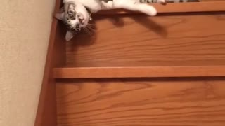 cat coming down stairs