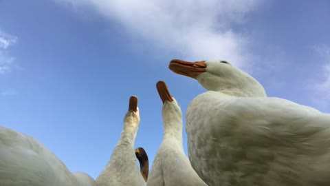 Feeding the Ducks: Your Break For the Day