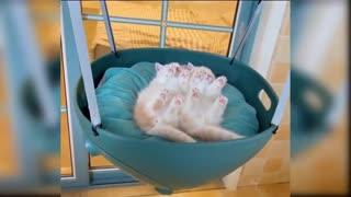fun cats mindblowing compilation