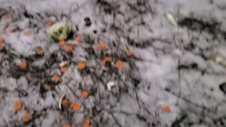 Wild Rabbits winter Journey Day 6 Part 1