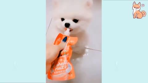 BabyDogs training