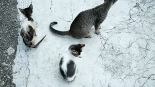 Feral Cat Found With 2 Kitten