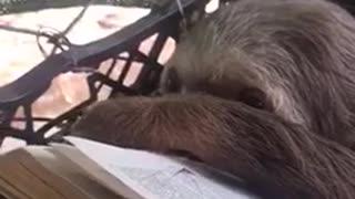 Sloth Enjoys Book Reading Session