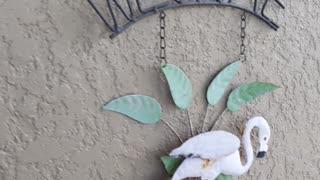 Moth that looks like a leaf