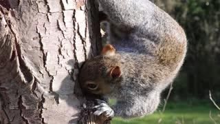 Ein Eichhörnchen ist nur eine Ratte mit süßerem Outfit
