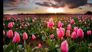 RELAX NATURE. BEAUTIFUL FLOWERS
