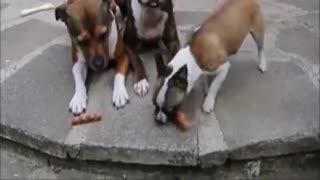 Dog take the whole food