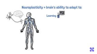 Understanding your Brain's Neuroplasticity