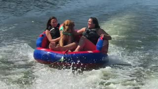 Golden Retriever Goes for a Ride on the River