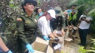 Más de 200 especies de animales fueron liberadas en Cartagena
