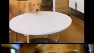 Crazy Intelligent dog