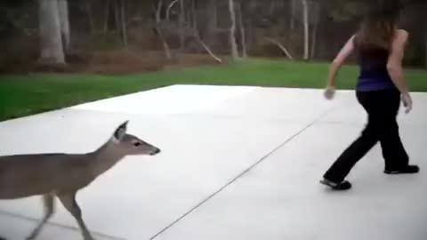 Un ciervo recorre kilómetros para visitar a una mujer que le prepara un biberón todos los días
