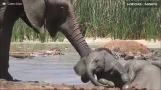 Elefantes salvam filhote de afogamento