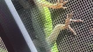 Cute lizard on my screen