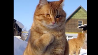 Pictures of cats 2021