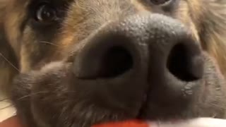 Doggy Loves Dental Hygiene