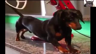 Funny Dogs Video Compilation 2021 | Funny Videos