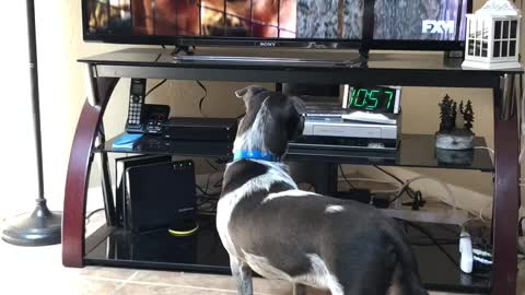 Cooper loves watching A Dogs Purpose.