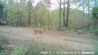Trail Camera 4