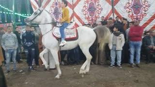 11 years old boy makes his arabian horse dancing well