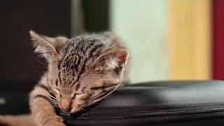 Slipping cat 🐈