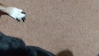 Dog afraid of the word bath