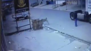 Young man saves dog from car crash