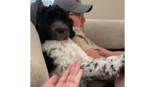 Watch what this dog does when asked if it wants a paw-dicure