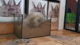 rabbit digging bottle